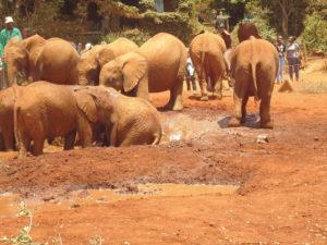 Baby Elephant Orphanage
