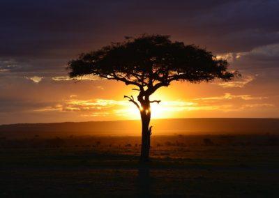 africa-3002460_1280